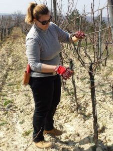 Natascia Riggi durante una sessione di potatura in campo